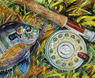 Bluegill and fly rod watercolor